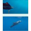 Luma-Vu Underwater HD Camera